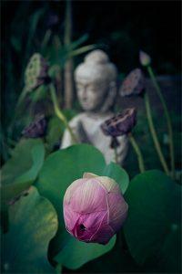 Inner Buddhism Revealed